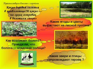 Какие деревья селятся в приболотице?А какие — на сухих островах в болотном «м