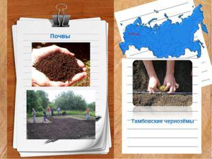 Почвы Тамбовские чернозёмы