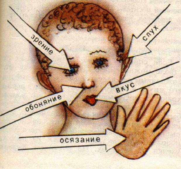 http://veda.ru/uploads/content/14052013/695d32ada8b7a56dd2b891298bced5b2.jpg