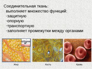 Соединительная ткань: выполняет множество функций: защитную опорную транспорт