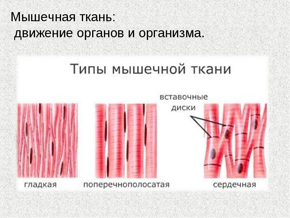 Мышечная ткань: движение органов и организма.
