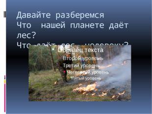 Давайте разберемся Что нашей планете даёт лес? Что даёт лес человеку?