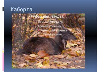 Каборга