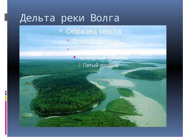 Дельта реки Волга