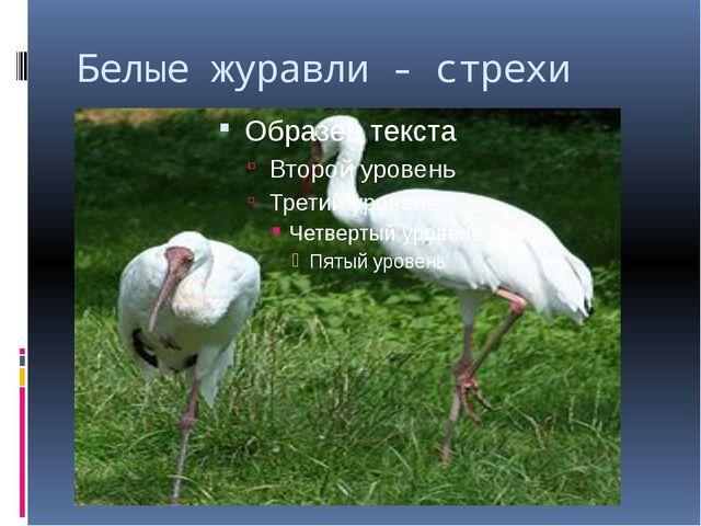 Белые журавли - стрехи