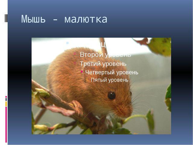Мышь - малютка