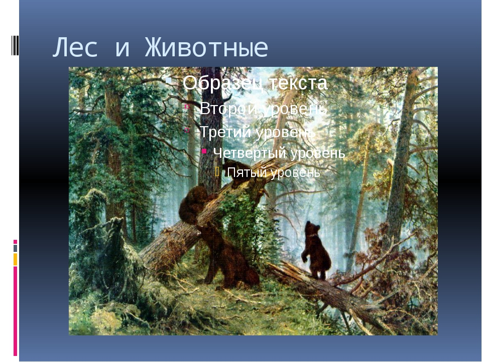 Лес и Животные