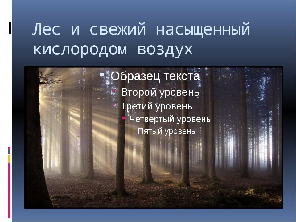 Лес и свежий насыщенный кислородом воздух