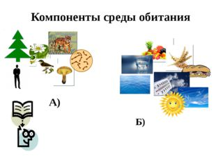 Компоненты среды обитания А) Б)