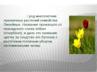 Тюльпа́н — род многолетних луковичных растений семейства Лилейные. Название