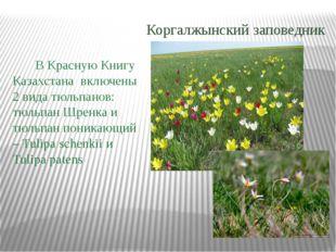 В Красную Книгу Казахстана включены 2 вида тюльпанов: тюльпан Шренка и тюльп