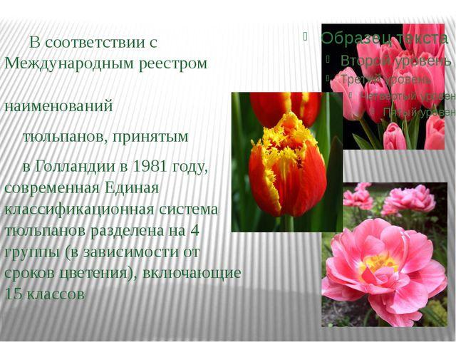 В соответствии с Международным реестром наименований тюльпанов, принятым в Г...