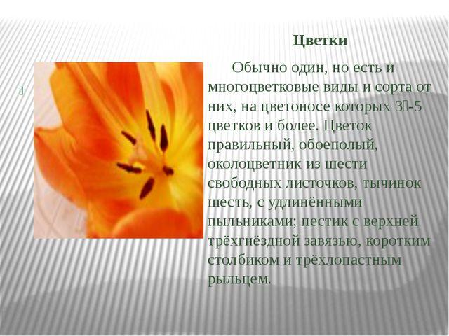 Цветки Обычно один, но есть и многоцветковые виды и сорта от них, на цветоно...