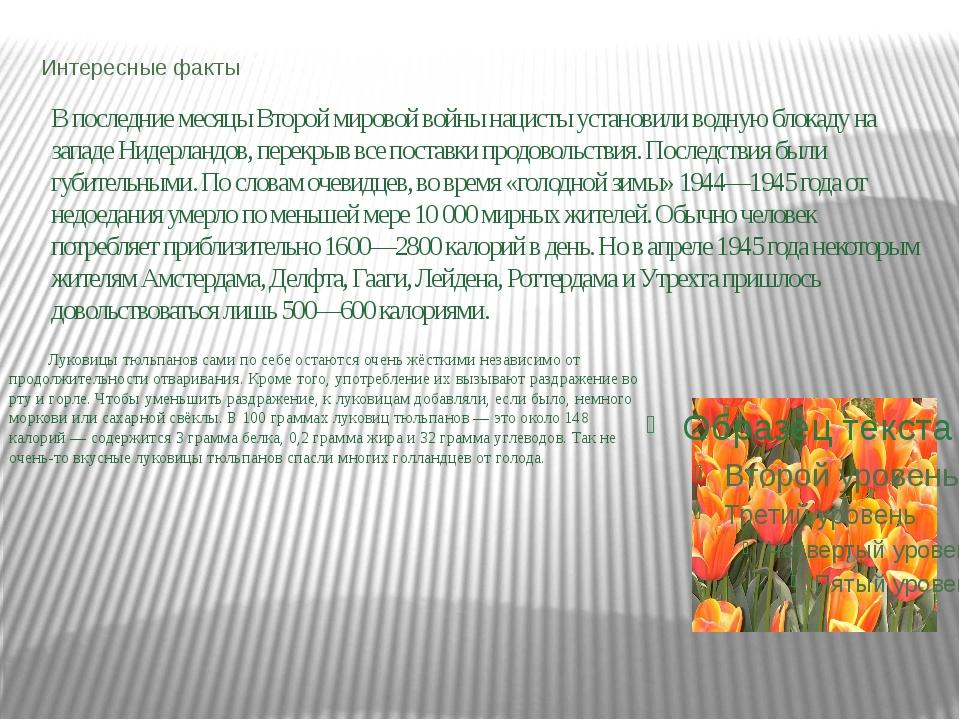 Интересные факты Луковицы тюльпанов сами по себе остаются очень жёсткими неза...