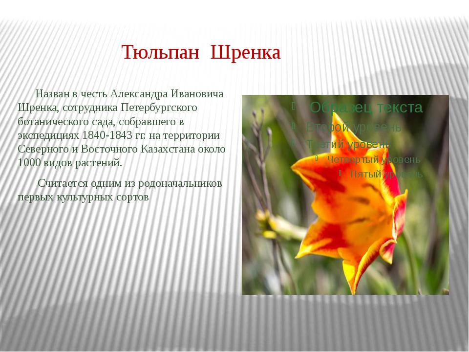 Тюльпан Шренка Назван в честь Александра Ивановича Шренка, сотрудника Петербу...