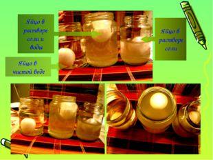 Яйцо в растворе соли и воды Яйцо в растворе соли Яйцо в чистой воде