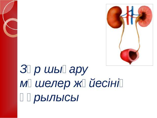 Зәр шығару мүшелер жүйесінің құрылысы