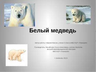 Белый медведь Автор работы: Иванов Максим, ученик 6 класса МБОУШР «Гимназия
