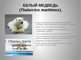 БЕЛЫЙ МЕДВЕДЬ (Thalarctos maritimus), хищное млекопитающее семейства медведей