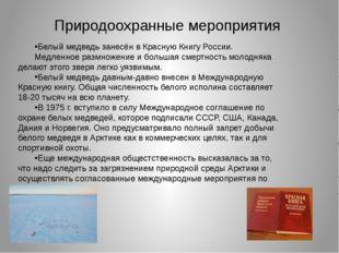 Природоохранные мероприятия Белый медведь занесён в Красную Книгу России. Мед