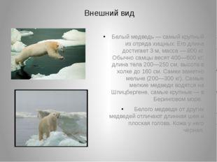 Внешний вид Белый медведь— самый крупный из отряда хищных. Его длина достига