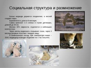 Социальная структура и размножение Белые медведи держатся поодиночке, а весно