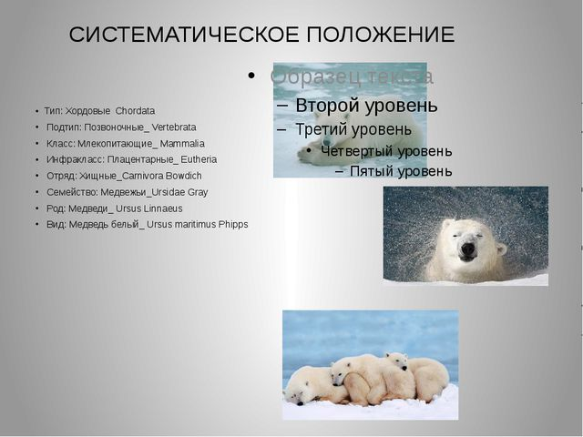 Тип: Хордовые Chordata Подтип: Позвоночные_ Vertebrata Класс: Млекопитающие_...