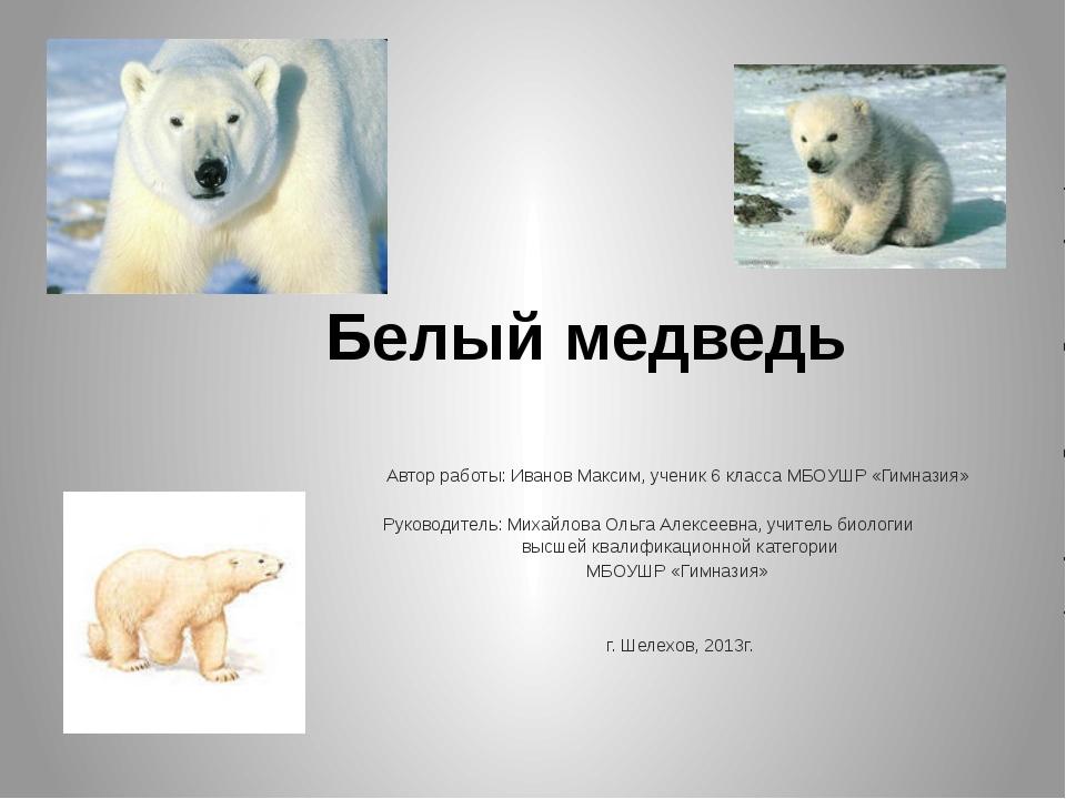 Белый медведь Автор работы: Иванов Максим, ученик 6 класса МБОУШР «Гимназия...