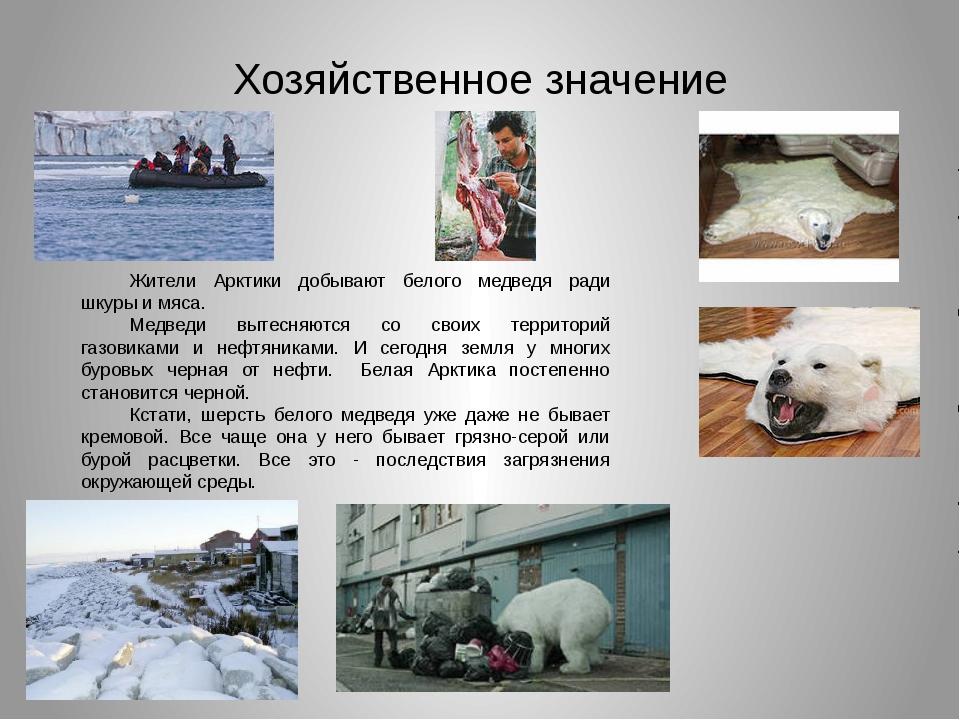 Хозяйственное значение Жители Арктики добывают белого медведя ради шкуры и мя...