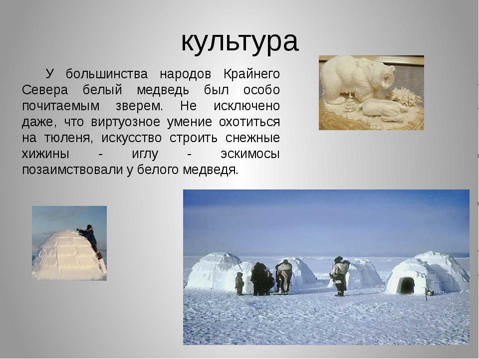 культура У большинства народов Крайнего Севера белый медведь был особо почита...