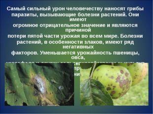 Самый сильный урон человечеству наносят грибы паразиты, вызывающие болезни ра