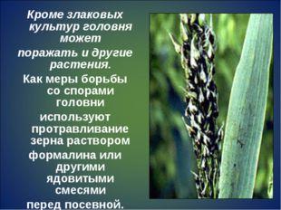 Кроме злаковых культур головня может поражать и другие растения. Как меры бор
