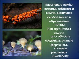Плесневые грибы, которые обитают в земле, занимают особое место в образовании