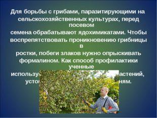 Для борьбы с грибами, паразитирующими на сельскохозяйственных культурах, пере
