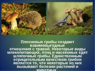 Плесневые грибы создают взаимовыгодные отношения с травой. Некоторые виды мле