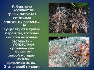 В большом количестве грибы питаются остатками сгинувших растений. Но существу