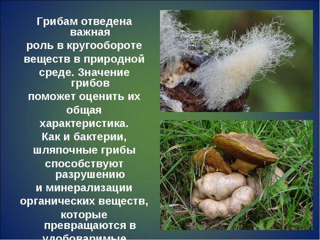 Грибам отведена важная роль в кругообороте веществ в природной среде. Значени...