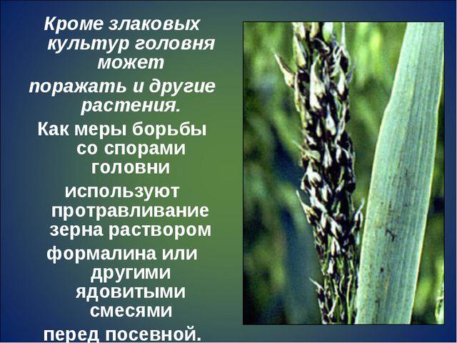 Кроме злаковых культур головня может поражать и другие растения. Как меры бор...