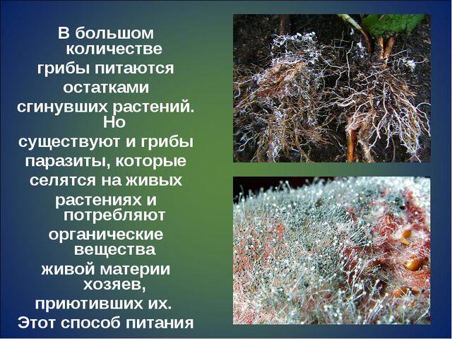 В большом количестве грибы питаются остатками сгинувших растений. Но существу...