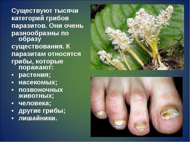 Существуют тысячи категорий грибов паразитов. Они очень разнообразны по образ...