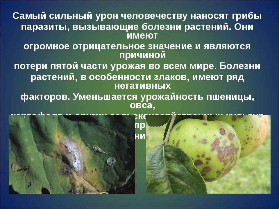Самый сильный урон человечеству наносят грибы паразиты, вызывающие болезни ра...
