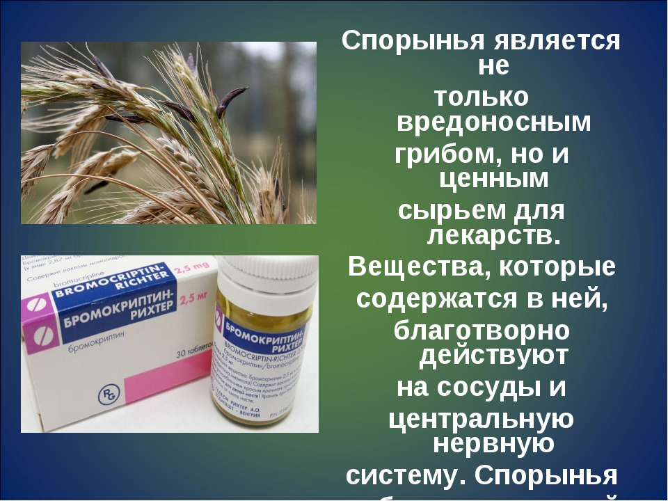 Спорынья является не только вредоносным грибом, но и ценным сырьем для лекарс...