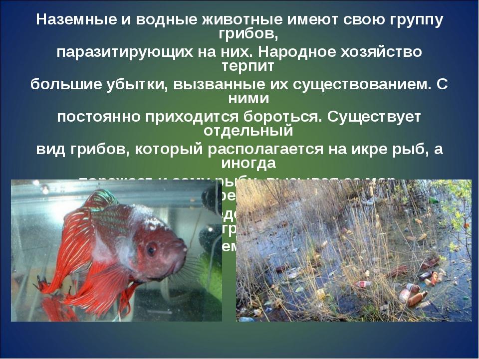 Наземные и водные животные имеют свою группу грибов, паразитирующих на них. Н...