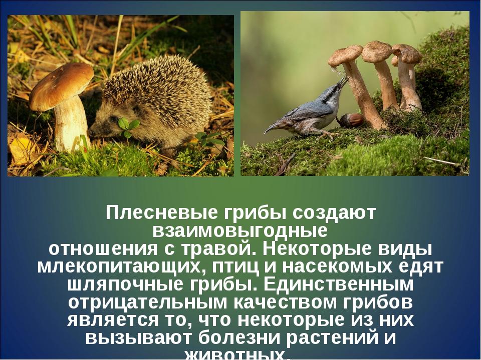 Плесневые грибы создают взаимовыгодные отношения с травой. Некоторые виды мле...