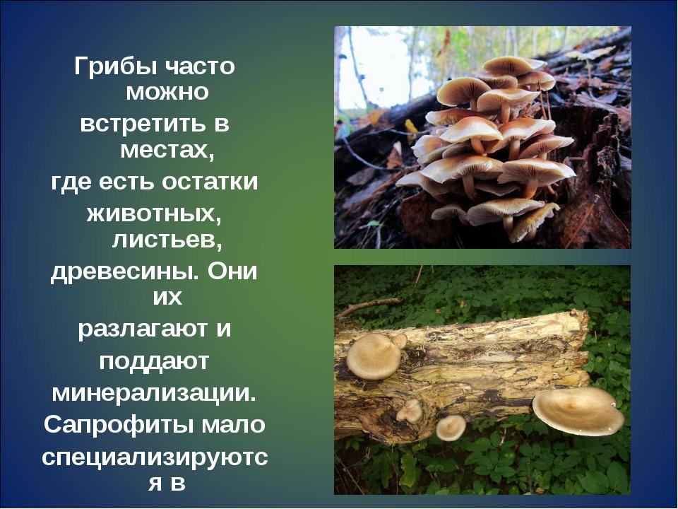 Грибы часто можно встретить в местах, где есть остатки животных, листьев, дре...