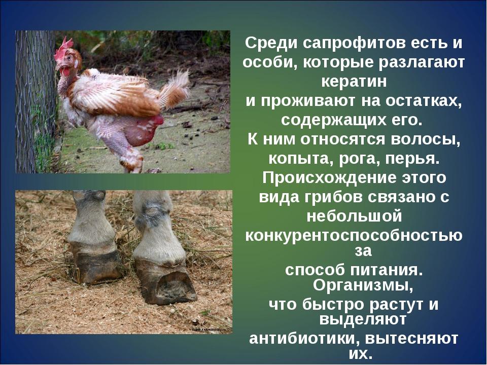 Среди сапрофитов есть и особи, которые разлагают кератин и проживают на оста...