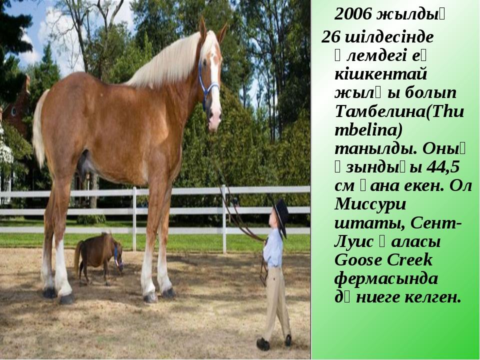 2006 жылдың 26 шілдесінде әлемдегі ең кішкентай жылқы болып Тамбелина(Thumbe...