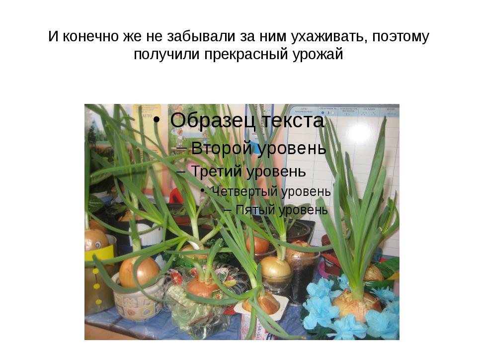 И конечно же не забывали за ним ухаживать, поэтому получили прекрасный урожай