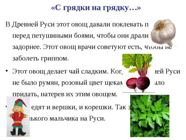 «С грядки на грядку…» В Древней Руси этот овощ давали поклевать петухам перед...