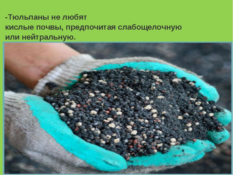 Фото цветов для кислых почв